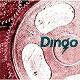 DINGO/S-T